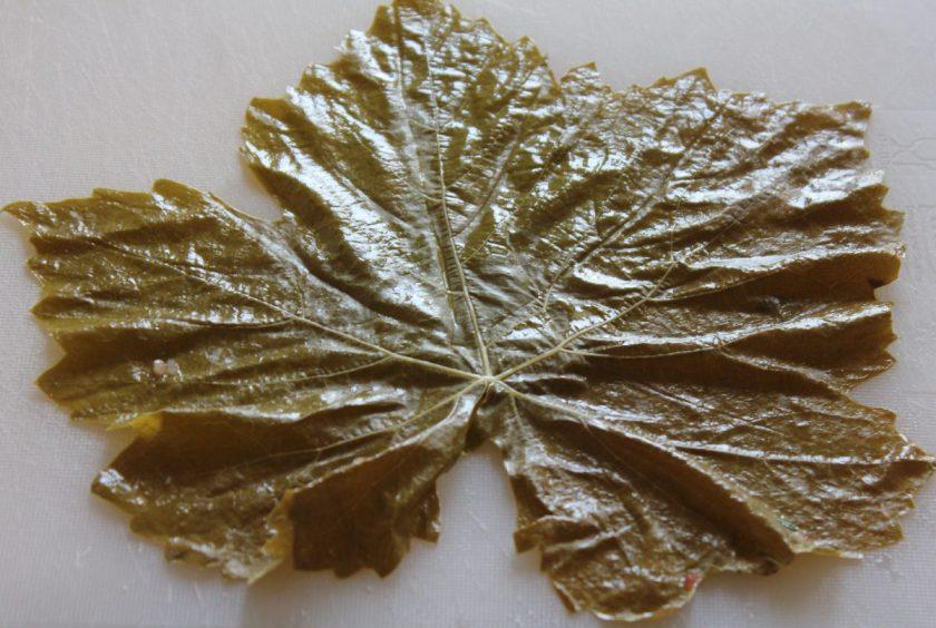 blanched vine leaf
